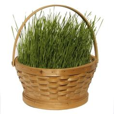 An Easter basket with real grass!