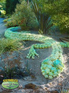This crafty garden design works on many levels. By utilizing slow growing sedum plants, this design is easy to maintain and drought tolerant too!
