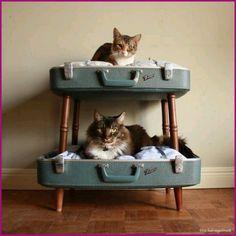 Home sweet home voor de kat
