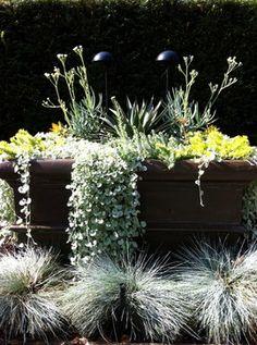 A Modern Tropical Garden 2012 - tropical - landscape - vancouver - Glenna Partridge Garden Design