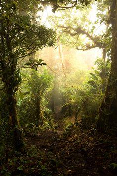 Costa Rica Monte Verde Cloud Forest bydotpitch