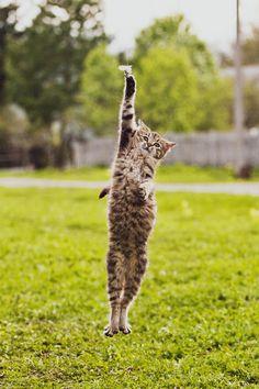 Un en haut, un en bas, touche tes pieds, lève tes pattes...on ne lâche pas si on veut garder la forme !