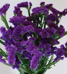 Ara Purple Statice