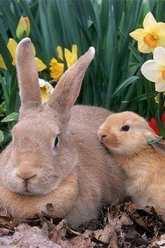 those are BIG ears!! bunny & baby