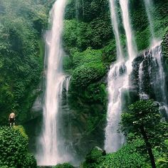 "wanderthewood: ""Sekumpul Waterfalls, Bali, Indonesia by fascinatingbali "" Bali Waterfalls, Bali Travel Guide, Gili Island, Lombok, Natural Beauty, Paradise, Explore, Amazing, Places"