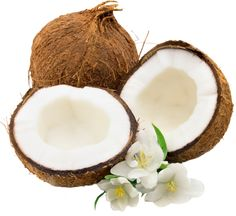 coconut_1_by_lenkinrom-d6hlw7k.png