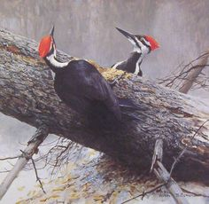 Robert Bateman Woodworkers Pileated Woodpeckers