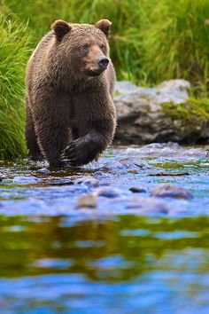 """Searching!!"" by Buck Shreck"