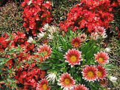 Flores, Blütenmeer, Cama, Descontos