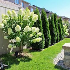 Beautify Your Garden With These Excellent Landscaping Tips! Boxwood Landscaping, Boxwood Garden, Landscaping Tips, Arborvitae Landscaping, Backyard Fence Decor, Landscaping Along Fence, Outdoor Gardens, Garden Planning, Backyard