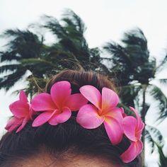 #plumeria #hawaii #aloha #flowers