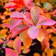 Képes idézetgyűjtemény szómíves érzelmiségieknek Fodor Ákos költő-műfordítótól   Szépítők Magazin Haiku, Worksheets, Learning, Plants, Studying, Literacy Centers, Teaching, Plant, Countertops