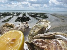 Oysters in Cancale, France. Definitely will be indulging in this!