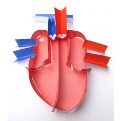 Aninnovative way to teach the structure and function of the heart! Captivateyour students with our unique model. It includesvalves that open and close and can even be contracted! Students make their heartusing the colourful parts working alone or in small groups. They use their model to identify the parts of the he