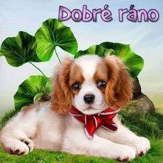 Corgi, Night, Good Morning Friends, Pets, Scenery, Art, Corgis