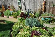 Succulent Corner Experiment by FarOutFlora..San Francisco...enjoyed their blog and Flickr photos for years..inspirational