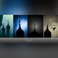 Birds #mood #birds #sky #evening #collection #deepstudio www.deep.studio