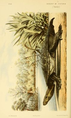 Decade 6-10 - Natural history of Victoria. - Biodiversity Heritage Library