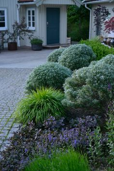 ✔ 56 fabulous xeriscape front yard design ideas and pictures 9 Tropical Landscaping, Landscaping With Rocks, Front Yard Landscaping, Backyard Landscaping, Landscaping Ideas, Thuja, Backyard Shade, Front Yard Design, Landscape Design Plans