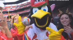 What do the cardinals have