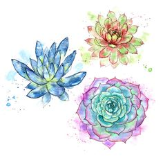 Sketchbook // Watercolour Succulents in Pink Purple Blue and Green Succulents Drawing, Cactus Drawing, Watercolor Succulents, Floral Watercolor, Watercolor Illustration, Watercolor Paintings, Succulent Tattoo, Crystal Drawing, Art Basics