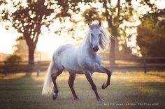 Wiebke Haas animal photography; spanish horse