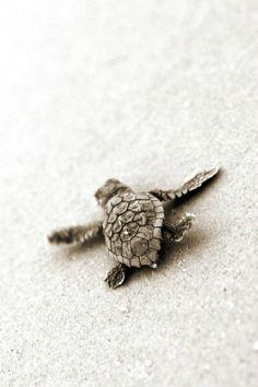 Shoreline discovery baby turtle
