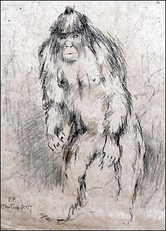 Yeti, unknown primate of Central Asia. Sketch by Pollyanna Pickering, 2007…