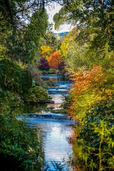 Ireland's 40 shades of green gain some friends in the fall, with deep gold, fiery orange, and earthy russet tones transforming our trees and landscapes. At Mount Usher Gardens in County Wicklow, you can almost see the seasons moving across the riverbank from one side to the other.