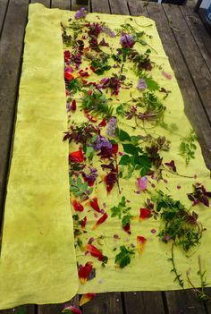 extensive list of plants for eco-dying and eco-printing
