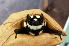 Panda Bat Researchers Discover New Genus Niumbaha Superba South Sudan Read More... http://www.batsrule.info/2016/11/panda-bat-researchers-discover-new.html