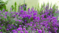Desert Gardening: What's the Right Shrub for You? Ideas and plant recommendations from Lowes