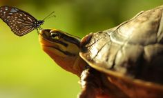 Butterfly Turtle by EDEMIN RAMIREZ viewfinder image production on 500px