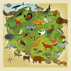 Kapitan Kamikaze - Adam Pekaloski Map of Polish wildlife (a whale? Poland Map, Visit Poland, World Thinking Day, World Languages, Learning Time, Map Art, Animals For Kids, Preschool Activities, Teaching Kids