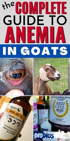 Is your goat lethargic, sick, or does she have bottle jaw? All of these are signs of anemia in goats. Learn more about treating anemia in goats and how to get your goats back to total health. Feeding Goats, Raising Goats, Trimming Goat Hooves, Goat Shelter, Goat Care, Nigerian Dwarf Goats, Goat Farming, Baby Goats