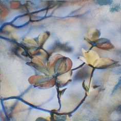 Painted Dogwood II      © 2014    32 x 32 inches