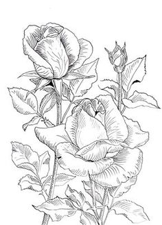 Beautiful Flower Drawings, Flower Line Drawings, Flower Sketches, Outline Drawings, Rose Coloring Pages, Adult Coloring Book Pages, Coloring Books, Floral Drawing, Fabric Painting
