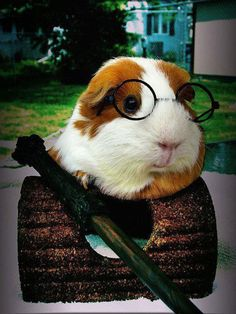 Now your guinea pig can be fashionable too.  You just never know when you might need to suit up.