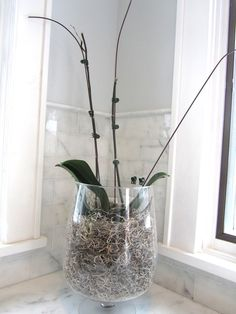Reviving my stick in the dirt (aka orchid)  ~~Yes! Maybe it's not too late for my poor little guy... Great tips from luxe + lillies