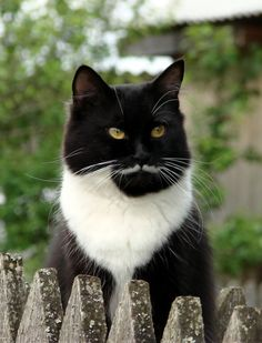 Built in stache! #meow ❤️