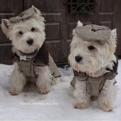 Im not really one for dressing dogs up in silly outfits but a warm sweater or coat comes in handy in the colder months. Some dogs however really suit hats but not if your dog doesn't want to wear one!