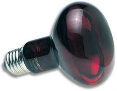 Zoo Med Nocturnal Infrared Incandescent Heat Lamp 150 Watts - http://pets.goshoppins.com/reptile-supplies/zoo-med-nocturnal-infrared-incandescent-heat-lamp-150-watts/