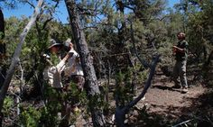 Major forest die-offs due to drought, heat and beetle infestations or deforestation could have consequences far beyond the local landscape. Wipe Out, The Other Side, Bradley Mountain, The Locals, Habitats, Environment, Earth, Science, Canning