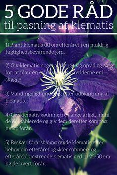 Pasning, plantning og beskæring af klematis. #klematis #clematis #slyngplanter…