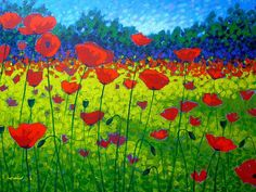 John Nolan - Poppy Fields