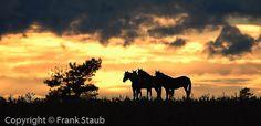 Wild horse silhouettes. Black Hills Wild Horse Sanctuary, Hot Springs, SD.