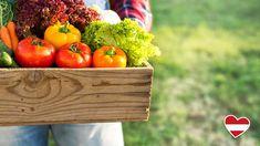 In keiner anderen Jahreszeit ist die Auswahl an frischem Gemüse so groß und bunt wie im Sommer. Jede Menge Sonnenstunden und Wärme sorgen dafür, dass das heimische Sommergemüse im Freilandanbau die volle Reife an Geschmack und Inhaltsstoffen erreicht. #gemüse #sommer #sommergemüse #gesundessen #freshfood #foodfacts #lidl #lidlösterreich #meinheimvorteil #lohntsicheinfach Food Facts, Lidl, Bunt, Vegetables, Harvest Season, Seasons, Healthy Eating, Vegetable Recipes