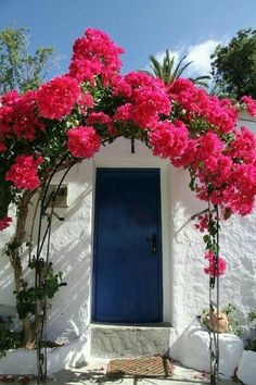 Wonderful Bougainvillea Trellis Ideas Bougainvillea Vines – Elegantly Twine Up a Trellis Wonderful Bougainvillea Trellis Ideas. Bougainvillea has been considered as one of the bright and colo… Bougainvillea Trellis, Ab Ins Beet, Beautiful Flowers, Beautiful Places, Tomato Garden, Fruit Garden, Garden Plants, House Plants, Colorful Garden