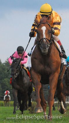 Wise Dan can do it all! He scores in the Fourstardave on the turf!