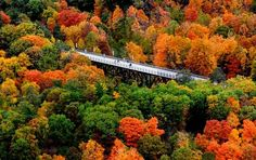 This aerial photograph, taken from about 800 feet above the ground, shows a portion of the Walkway Over the Hudson in Highland surrounded by trees displaying a range of dazzling autumn colors. Photo taken Saturday, October 23, 2010